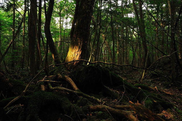 Лес самоубийц (6)