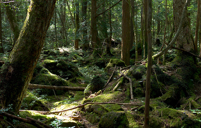 Лес самоубийц (7)