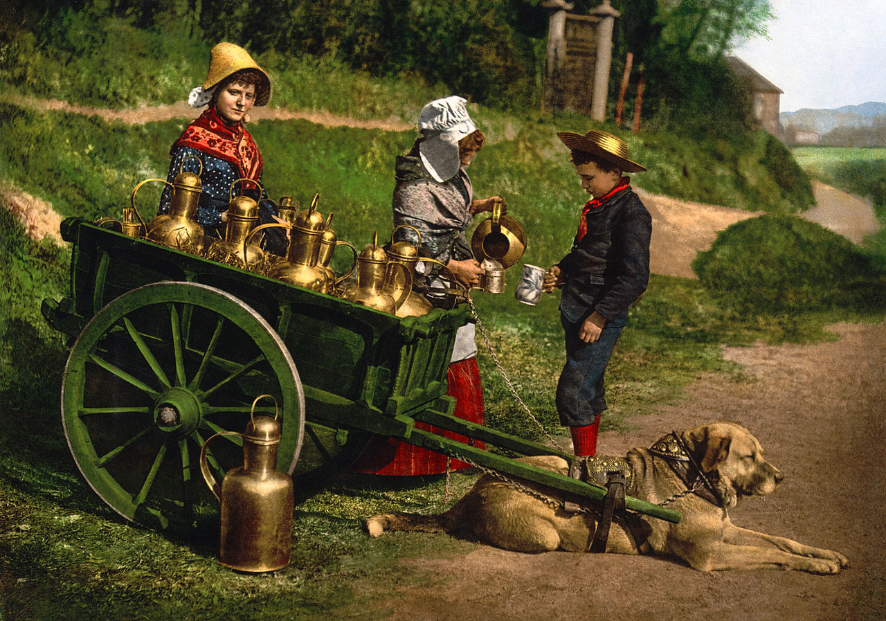 7. Фотоснимок конца XIX века с двумя разносчиками молока с тележкой, запряжённой собакой; Бельгия