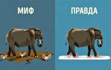 5 мифов о животных