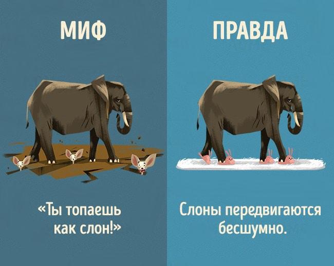 5-mifov-o-zhivotnyih-2