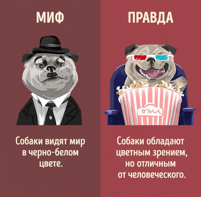 5-mifov-o-zhivotnyih-5