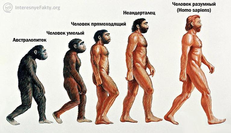 E`volyutsiya-cheloveka