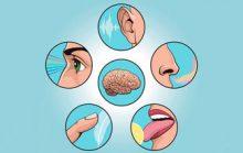 Факты об органах чувств человека