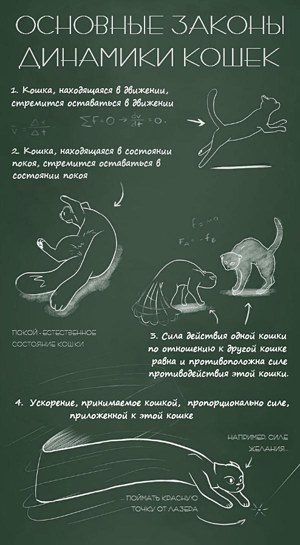 Fizika-koshek-3