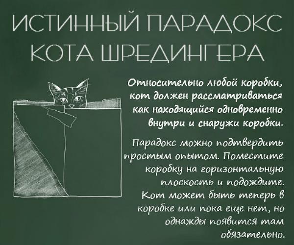 Fizika-koshek-4