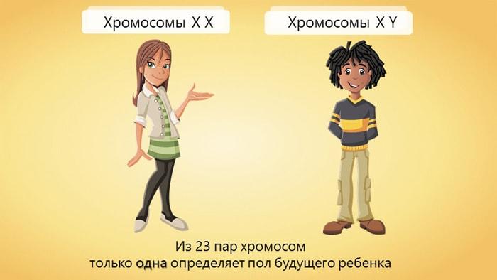 Hromosomyi.-Polovaya-sistema-cheloveka