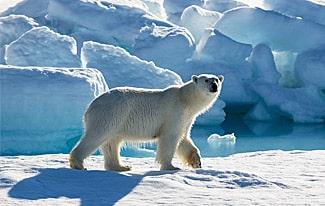 10 фактов о Большом Арктическом заповеднике