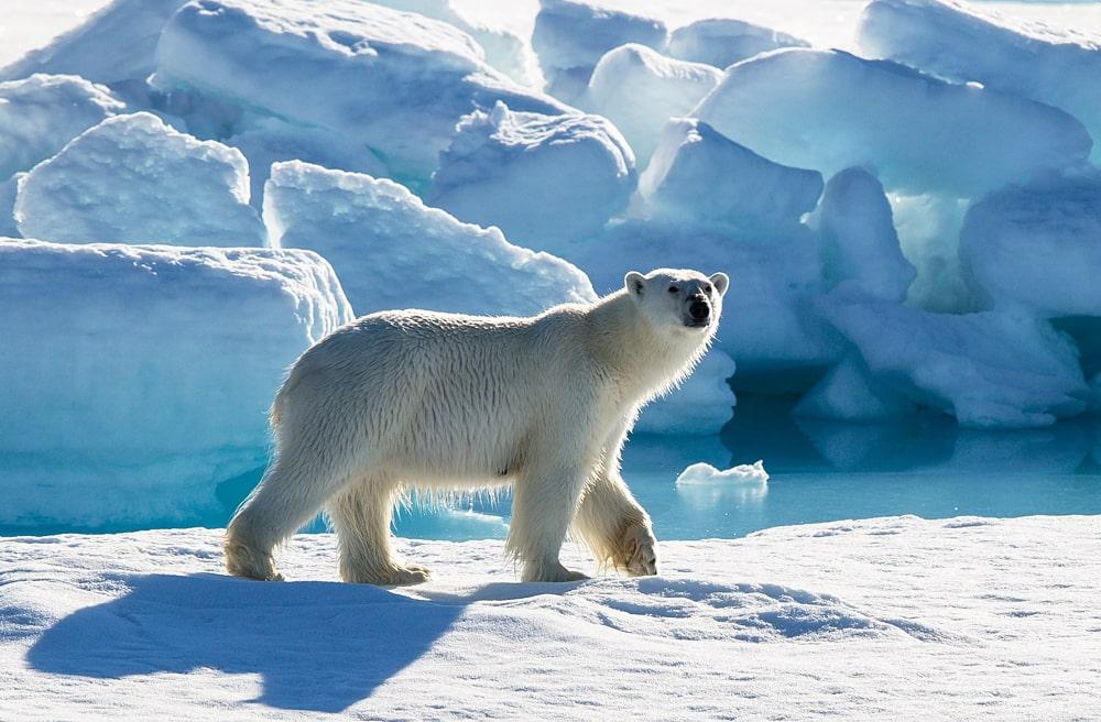 Interesnye-fakty-o-Bolshom-Arkticheskom-zapovednike