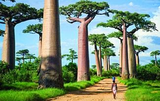 25 интересных фактов о Мадагаскаре