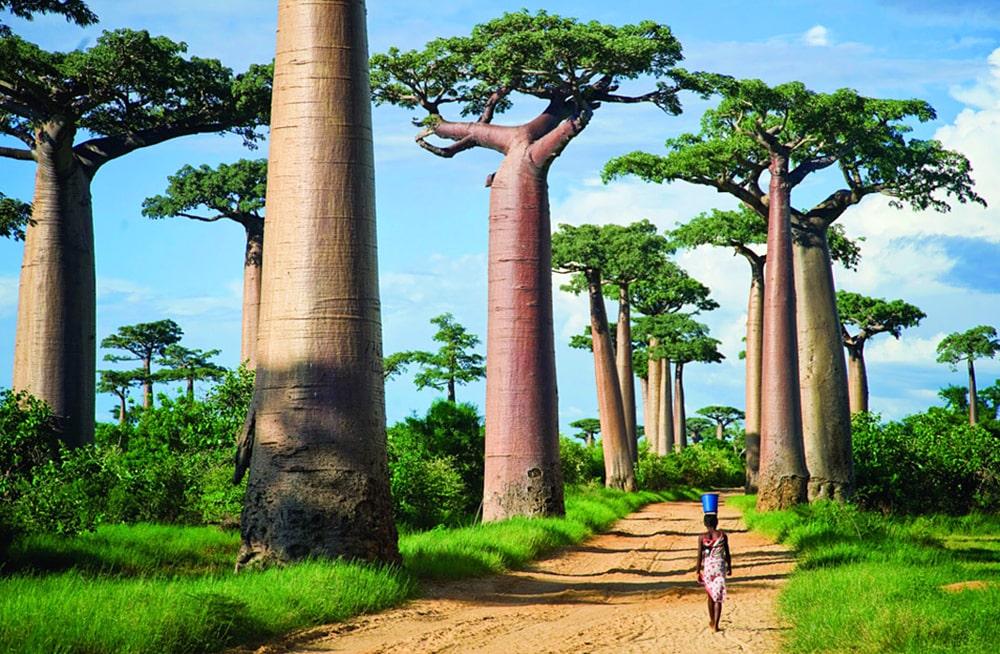 Interesnye-fakty-o-Madagaskare