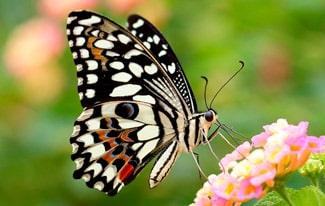 18 интересных фактов о бабочках