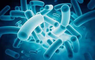 19 интересных фактов о бактериях