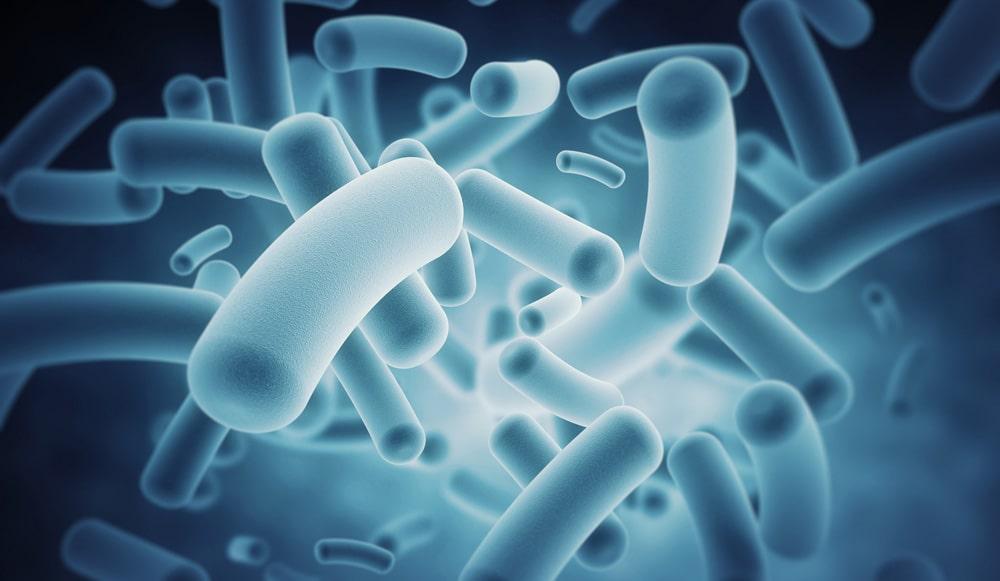 Interesnye-fakty-o-bakteriyah