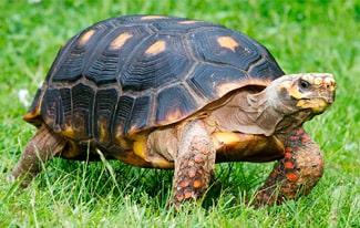 19 интересных фактов о черепахах
