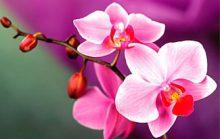 16 интересных фактов о цветах