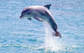 16 интересных фактов о дельфинах