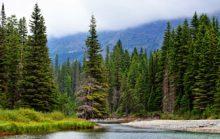 12 интересных фактов о хвойных лесах