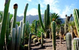 16 интересных фактов о кактусах