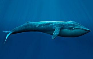 25 интересных фактов о китах