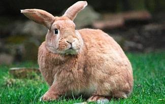 17 интересных фактов о кроликах