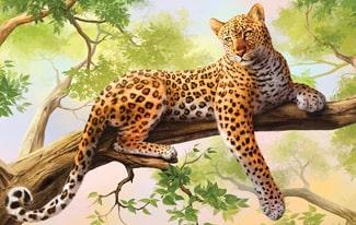 19 интересных фактов о леопардах