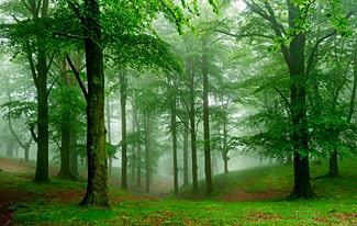 26 интересных фактов о лесах и деревьях