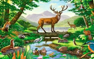 12 интересных фактов о лесных животных