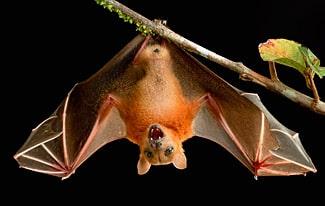 19 интересных фактов о летучих мышах