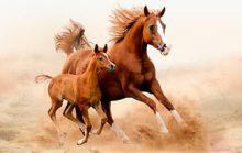 12 интересных фактов о лошадях