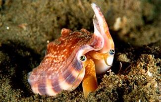 29 интересных фактов о моллюсках
