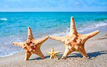 19 интересных фактов о морских звездах