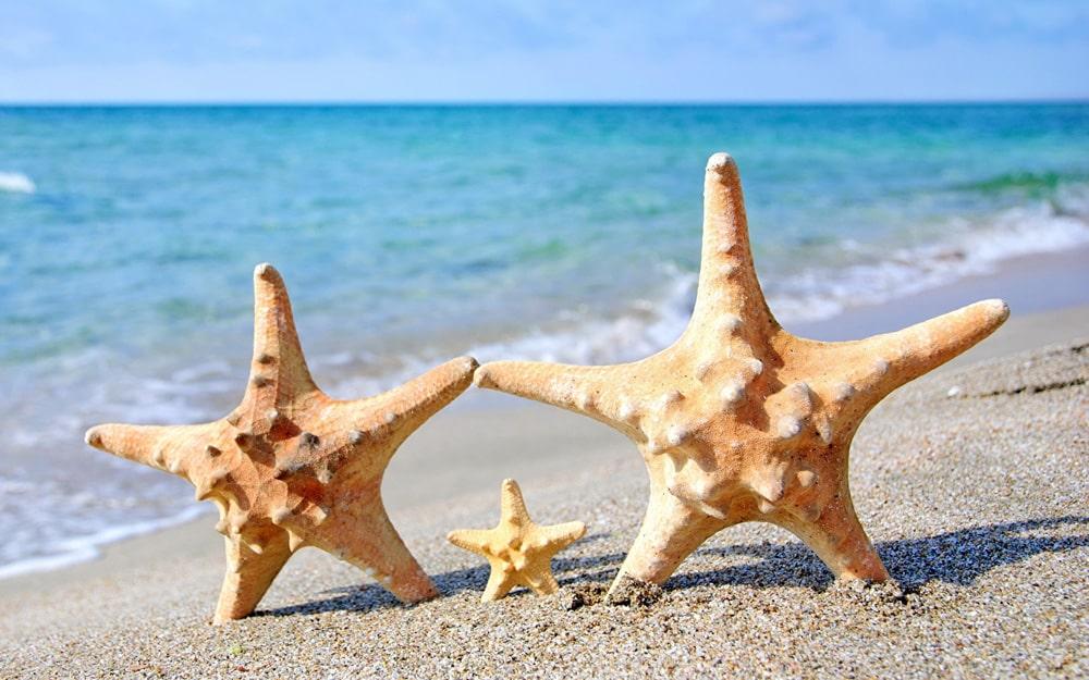 Interesnye-fakty-o-morskih-zvezdah