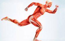 17 интересных фактов о мышцах