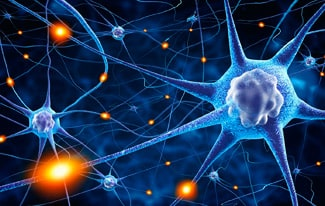16 интересных фактов о нервной системе человека
