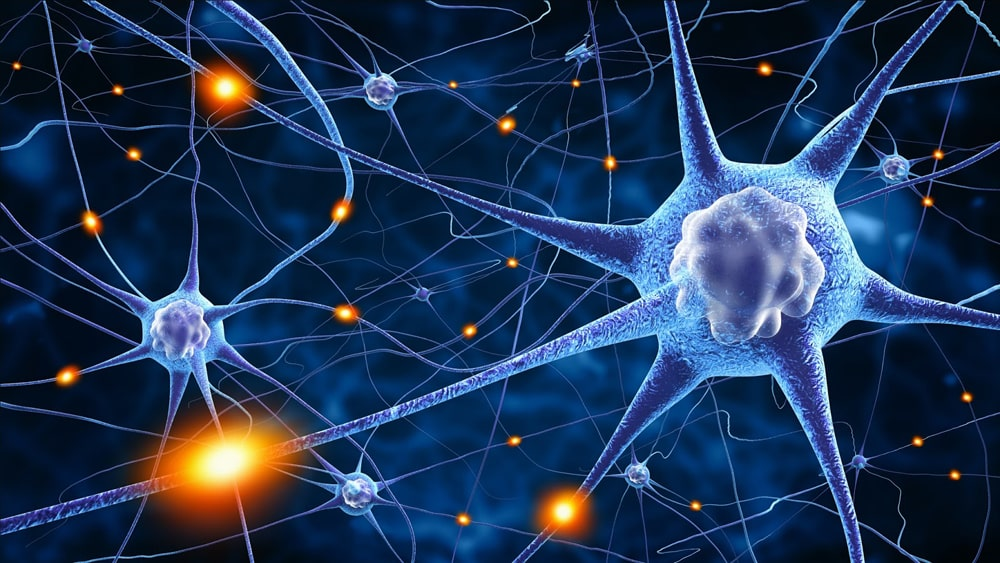 Interesnye-fakty-o-nervnoj-sisteme