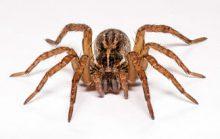 30 интересных фактов о пауках