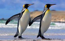 25 интересных фактов о пингвинах