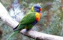 24 интересных факта о попугаях