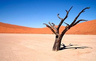 16 интересных фактов о пустынях