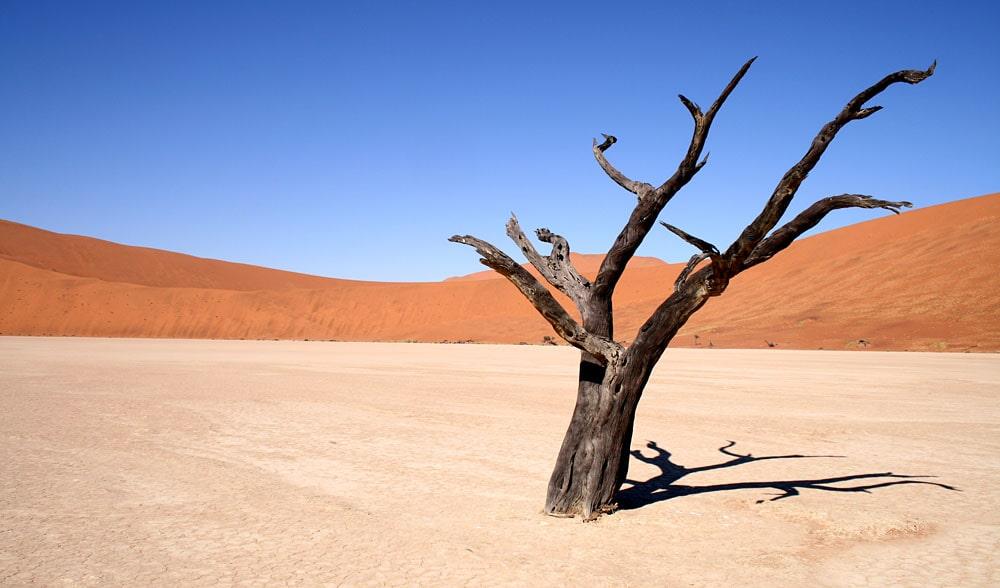 Interesnye-fakty-o-pustynyah