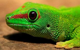 21 интересный факт о рептилиях
