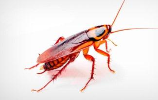 17 интересных фактов о тараканах