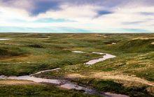 12 интересных фактов о тундре