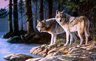 26 интересных фактов о волках