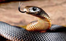 16 интересных фактов о змеях