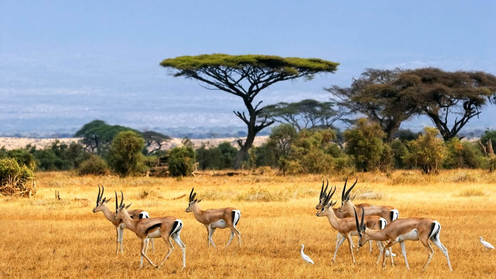 Interesnye-fakty-ob-Afrike