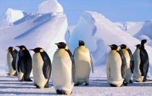 23 интересных факта об Антарктиде