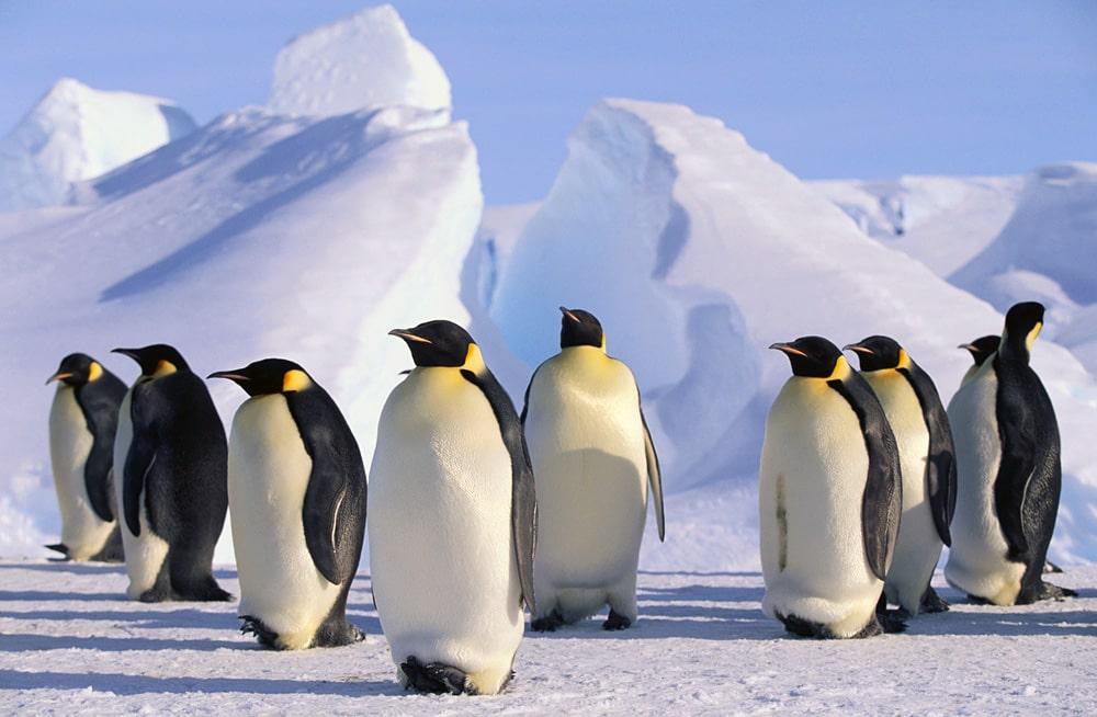Interesnye-fakty-ob-Antarktide