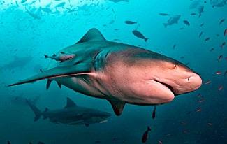 30 интересных фактов об акулах